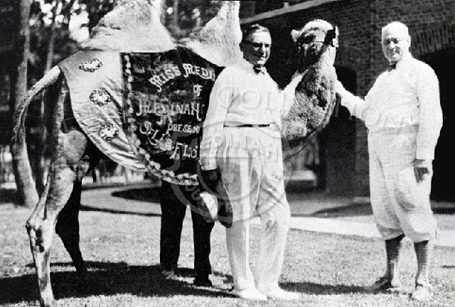 Chicago mayor Anton Cermak (left), a Medinah member, poses with Miss Medinah (camel) and James Triner in the early 1930s. The scene is outside the clubhouse. The camel served as a mascot, especially for the annual Camel Trail Day event, and fit with the club's desert oasis motif.